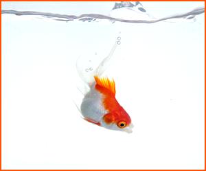 金魚によくある病気と予防法・治療法