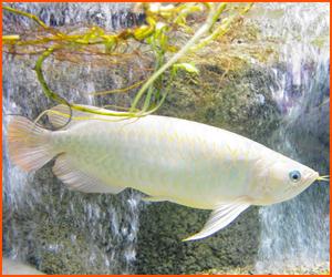 海水魚の飼育の難しさと成功のコツ