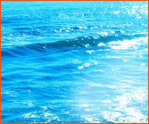 海水の作り方と水質管理の方法