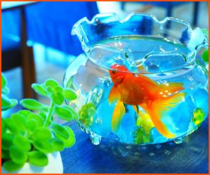 金魚のストレスを減らす方法と水草導入