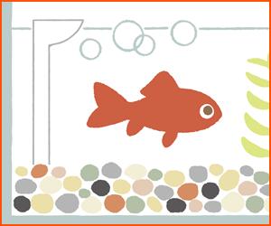 海水魚向けのろ過フィルターの選び方