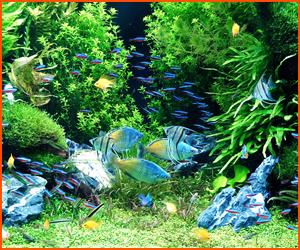 生態系を理解して水槽を組み上げよう
