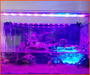 紫外線ライトで水質維持できるかも