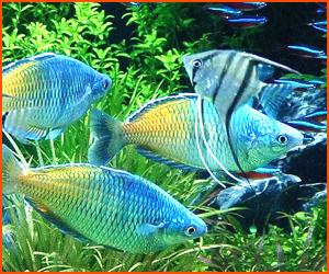 熱帯魚の適温と適切な水質