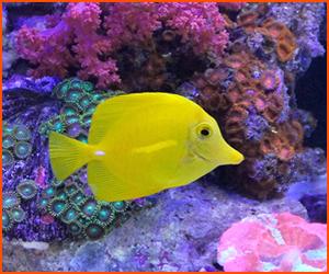 サンゴや水草の育て方と環境の作り方