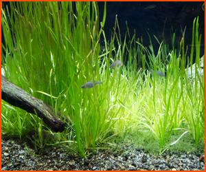 流木や水草・貝類から先に導入して